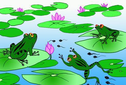 青蛙的池塘 故事